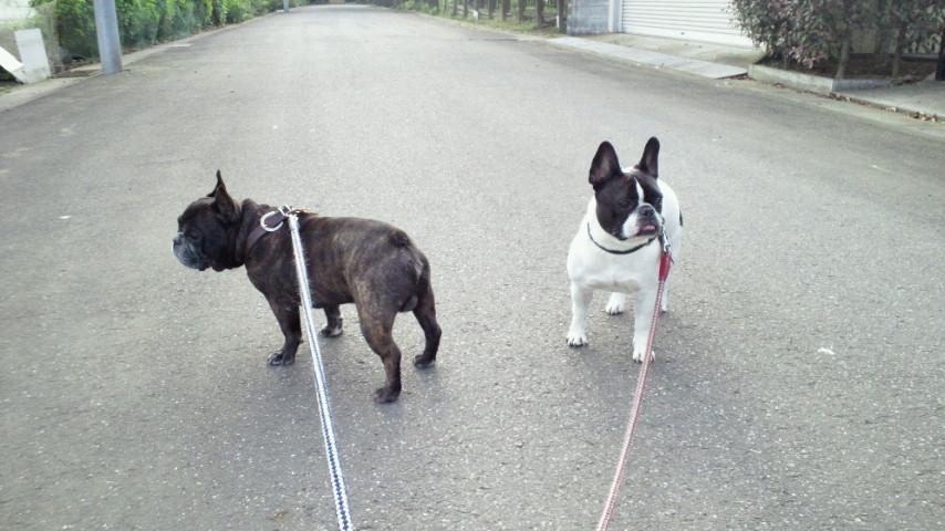 お早ようございまぁーす!愛犬散歩なう。 #ohayo