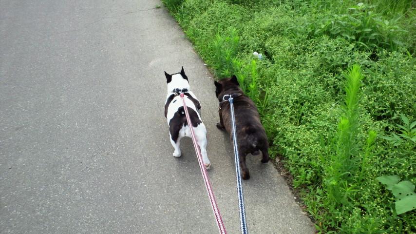 日曜日用散歩コース突撃なう。何故日曜日は散歩コースが違う事や、今日がその日だと解るのでしょうか?