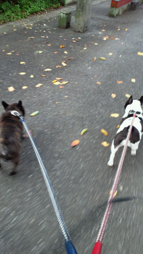 おはっ!愛犬散歩ちう。一応1時間程寝てみた、9時集合なので間に合いそうな件。