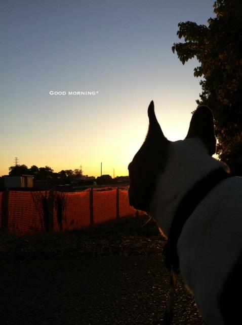 Good morning Sunrise!